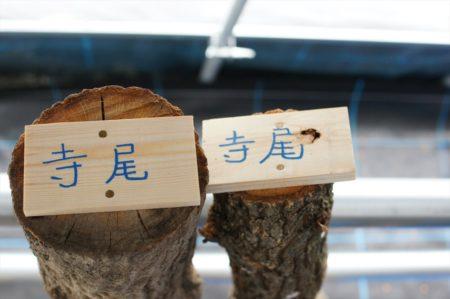 椎茸栽培 | 岩国市の土地情報ならネストハウス
