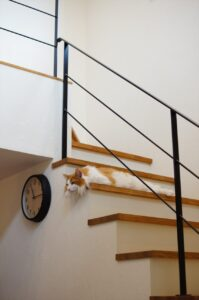 猫と暮らす家 | 岩国市で一戸建てならネストハウス