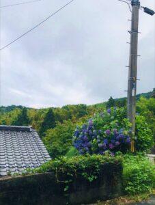 銭壺山 紫陽花 | 岩国市で新築一戸建てならネストハウス