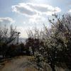 2月は梅の季節&平屋の暖かさをご体感ください